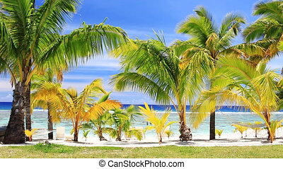 Palm trees on an amazing beach front