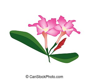 Pink Desert Rose Flower or Bignonia Flower - Beautiful...