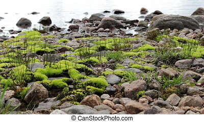 Moss at the lake