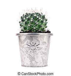 potted cactus - green cactus in metal flower pots on white...