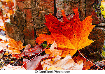 Background of red autumn leaves on forest floor