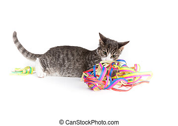 Happy Birthday - little grey tiger kitten playing with party...