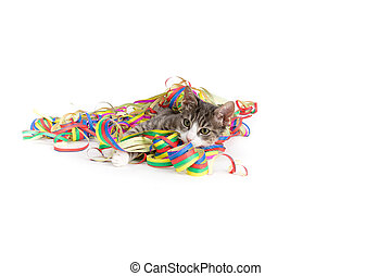 kitten wrapped in party streamers - little grey tiger kitten...