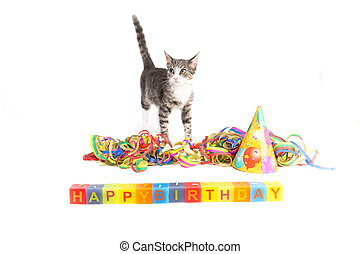 whish you happy birthday - little grey tiger kitten playing...