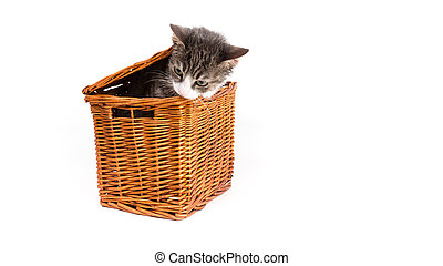 grey tiger kitten in the basket - little kitten sitting in a...