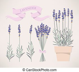 Bouquet of lavender - Illustration of lavender flowers in...
