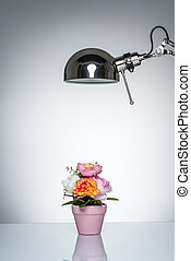 lighting up pink flower pot with desk lamp