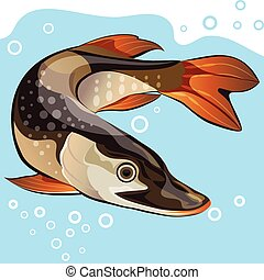 Fish, big pike, vector illustration - freshwater fish, big...