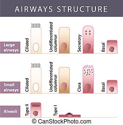 Airways structure - Nasal mucosa cells and micro cilia...