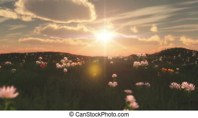 sunset in meadow with flowers