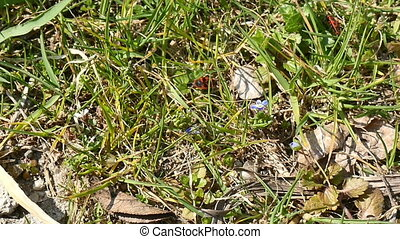 two bugs in grass