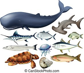 Aquatic animals on white illustration