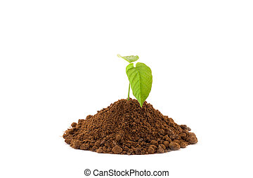Growing young plant isolate on white background.