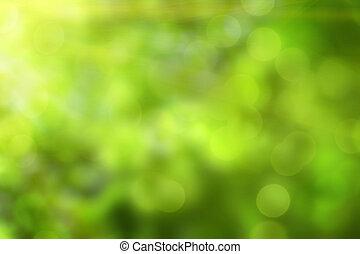 green oak leaves in summer