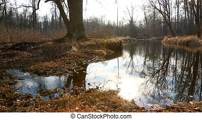 High water in spring forest - Spring tide in forest with...