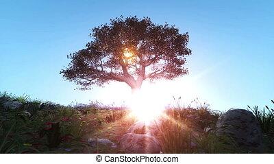 spring tree sun ray