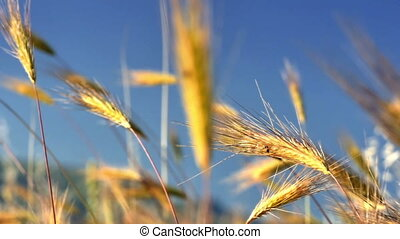 grass in meadow