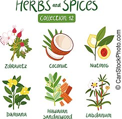 Herbs and spices collection 12. For essential oils,...