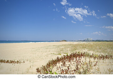 Sand dunes and vegetation with Sunshine Coast background