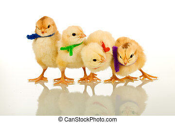 The party chicks - isolated with reflection