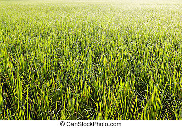 Pattern of green and yellow grass with color of morninglight