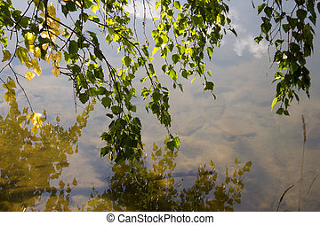 birch tree on lake bank with yellow foliage reflecting in calm water