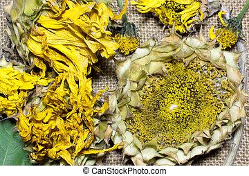 sunflower on sacking background
