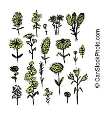 Collection of wildflowers, sketch fro your design Vector...