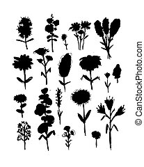 Collection of wildflowers, sketch fro your design. Vector...