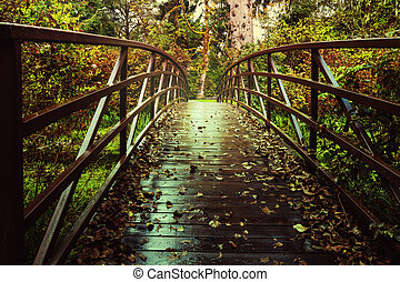 Boardwalk in forest - Boardwalk in the forest