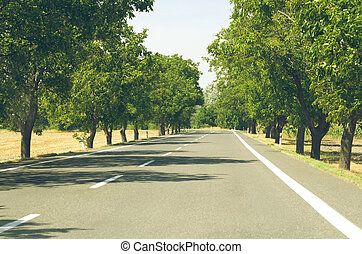 Tree Lined Asphalt Road - Walnut Tree Lined White Paint...