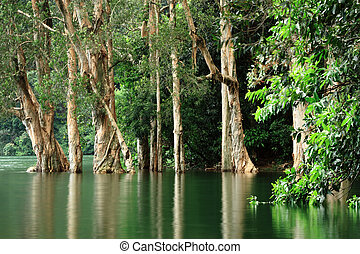 trees reflecting on the water surface