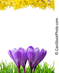 Spring border in 3 colors