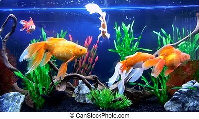 Underwater life - Several fishes are swimming in the big...