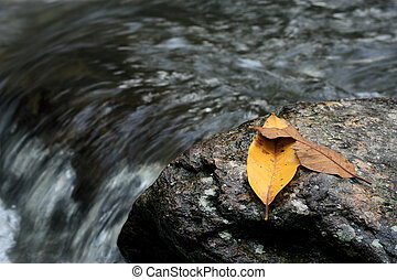 leafs on a rock