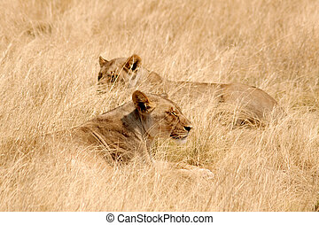 Etosha National Park, Namibia - Animals in the Etosha...