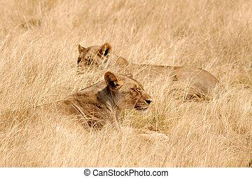 Etosha National Park, Namibia - Animals in the Etosha...