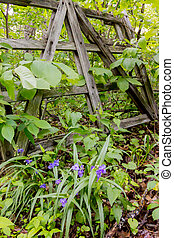 Purple wildflowers grow in front of old gate - The woods...