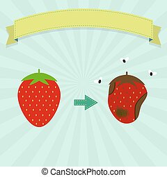 Rotten strawberry with flies and new strawberry. Blank...