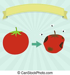 Rotten tomato with flies and new tomato Blank ribbon for...