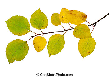 Branch of an apple tree with autumn leaves