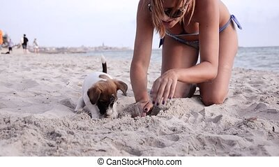 adorable little dog - jack russel and beautiful girl on...