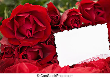 Red Roses and Blank Card - Beautiful red roses and blank...