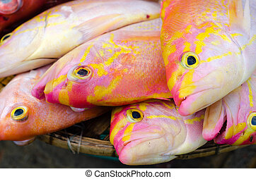 Colourful fishes on Nha Trang market.