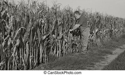 Farmer in corn field, monochrome