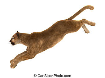 Big Cat Puma - 3D digital render of a big cat puma hunting...