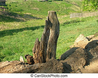 Snag - Wooden snag protruding from ground. Sometime it was a...