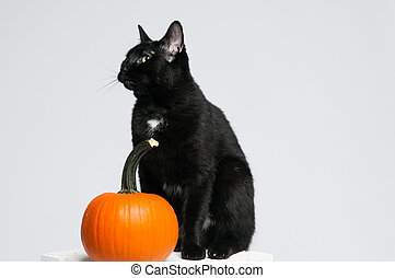 black halloween cat with a pumpkin - black cat and an orange...