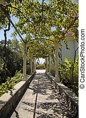 Pergola passage in the garden