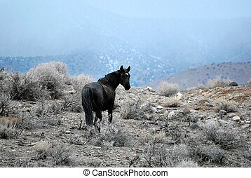 Nevada Wild Horse - wild horse on BLM land in Nevada with...